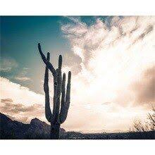 <b>Laeacco Canvas Calligraphy Painting</b> Cactus Tree Posters and ...