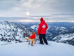 The best <b>snow jackets</b> for <b>dogs</b> of 2019: Hurtta, Ruffwear, and more ...
