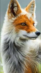 Weekly Inspiration 4 | Animals ~ <b>Fox</b> | Animals beautiful, Animals, <b>Fox</b>