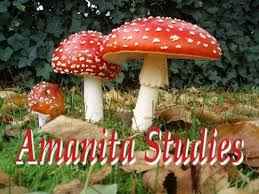 Abbreviations Amanitaceae org