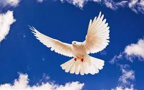 Kết quả hình ảnh cho cánh chim hòa bình