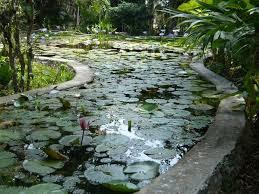 diy patio pond: raised formal koi pond and patio