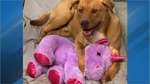 Stray <b>dog</b> who befriended purple <b>unicorn</b> finds adopter   WCTI