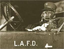 boston terrier vintage <b>fireman</b> pipe fire truck dog <b>photo</b> *<b>canvas</b>* <b>art</b> ...
