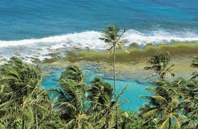 <b>Coral</b> Reefs Absorb 97 Percent of the Energy From <b>Waves</b> Headed ...