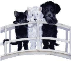 """Résultat de recherche d'images pour """"gifs chiens"""""""