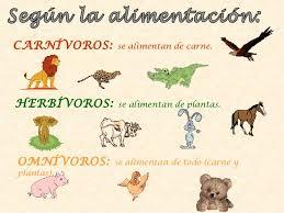 Resultado de imagen de animales primaria
