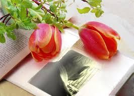 Slikovni rezultat za posmrtno cvijeće
