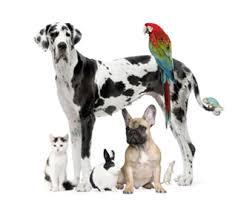 Eπικίνδυνοι όσοι κακοποιούν τα ζώα...