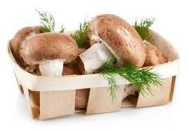 <b>Мицелий грибов</b> купить в России: цены. Продажа в интернет ...