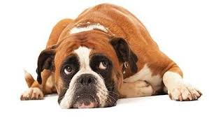 <b>Dog Beds</b> | Free In-store Collection | Pets at Home