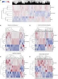 The Transcriptional and Protein Profile From Human ... - Frontiers