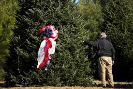 where to buy an eco friendly christmas tree organic sustainably harvested or even rent for a greener holiday buy environmentally friendly