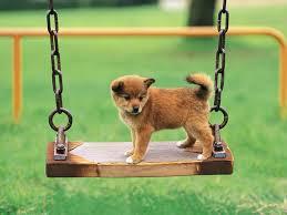 Ποια είναι η συχνότερη αιτία επίσκεψης για τον σκύλο στο κτηνίατρο;