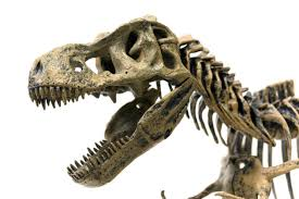 Palaeontology: The truth about <b>T</b>. <b>rex</b> : Nature News & Comment