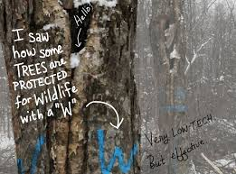 care about the forest heres what you can do  grist it shows the exact i saw how some trees are protected for wildlife with a w very low
