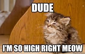 Dude I'm so high right meow - Misc - quickmeme via Relatably.com