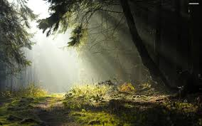 Image result for forest path