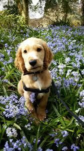 9 <b>cute</b> hearing <b>dog puppies</b> who love Spring <b>flowers</b>