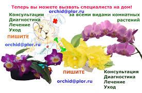 Уход за корнями и листьями орхидеи. Как заставить орхидею ...
