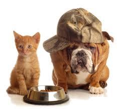 Πώς προσβάλλει η Ασπεργίλωση το σκύλο;