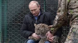 Russia President Putin encounters Sochi <b>leopard</b> cubs - BBC News