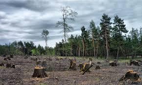 Любые запретительные меры по экспорту древесины неэффективны, - глава нацпредставительства Лесного попечительского совета - Цензор.НЕТ 6707