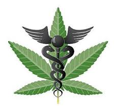 persuasive essay   danny    s portfoliopersuasive essay  san diego medical marijuana