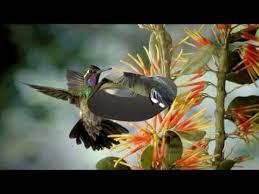 <b>Birds</b> and <b>flowers</b> (HD1080p)