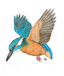Image result for kingfisher drawing