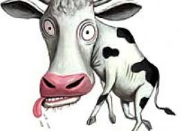 Image result for mad cow clipart