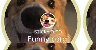 Funny corgi - Sticker Maker