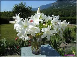 Nos amies les fleurs (Symbolisme) - Page 2 Images?q=tbn:ANd9GcT4EUzW8juFX5ymwPW4G6TmKTwfhyGC8WUPMrLWTAlNZ_K05pwMIA