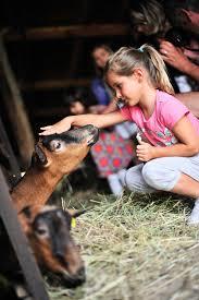 Pour faire un calin à nos jolies copines les chèvres,ferme rocamadour