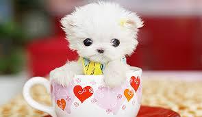 Cute stuff thread Images?q=tbn:ANd9GcT4WF7lgeoUoljuisZxhq76eGYInzBizZIBLqy7E2PVyExeLGaC