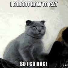Tired Of Being Cat Now! by Ifreet - Meme Center via Relatably.com