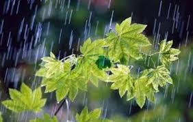 Image result for عکس در مورد باران