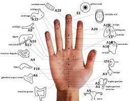 Resultado de imagem para tipos de acupuntura