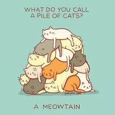 cat-memes | Tumblr via Relatably.com