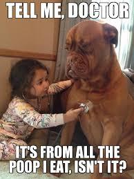 Distressed Dog - WeKnowMemes Generator via Relatably.com