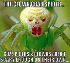 Spider Meme on Pinterest | Spider Quotes, Funny Spider and ... via Relatably.com