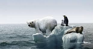 Resultado de imagen de Limpiar el planeta de contaminación