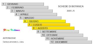 Carduus personata [Cardo mascherato] - Flora Italiana