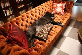 chesterfield sofas dog chesterfield furniture history