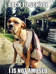 Back To School Pets on Pinterest | Dog School, Schools and Back To ... via Relatably.com