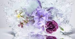 <b>Les Infusions de Prada</b> ~ New Fragrances