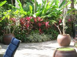 Small Picture 138 best Tropical landscap images on Pinterest Gardens