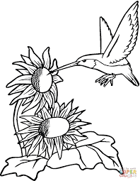 Small Picture Hummingbirds Simple Hummingbird Coloring Pages Coloring Page and