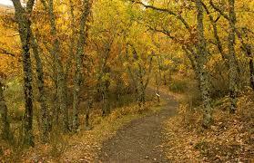 Resultado de imagen para bosques de otoño en españa