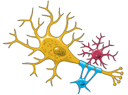 Brain Basics: The <b>Life</b> and Death of a Neuron | National Institute of ...